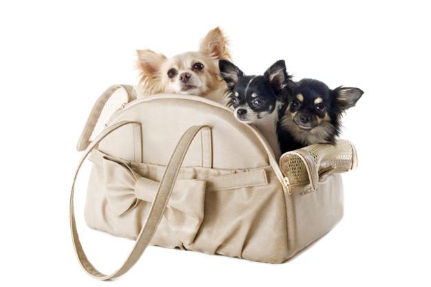 Borsa da viaggio per cani