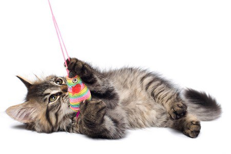 Giochi Gatti Pet Shop Online Targetpet